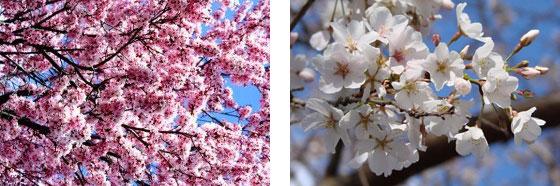 Flores en detalle Sierra Mágina