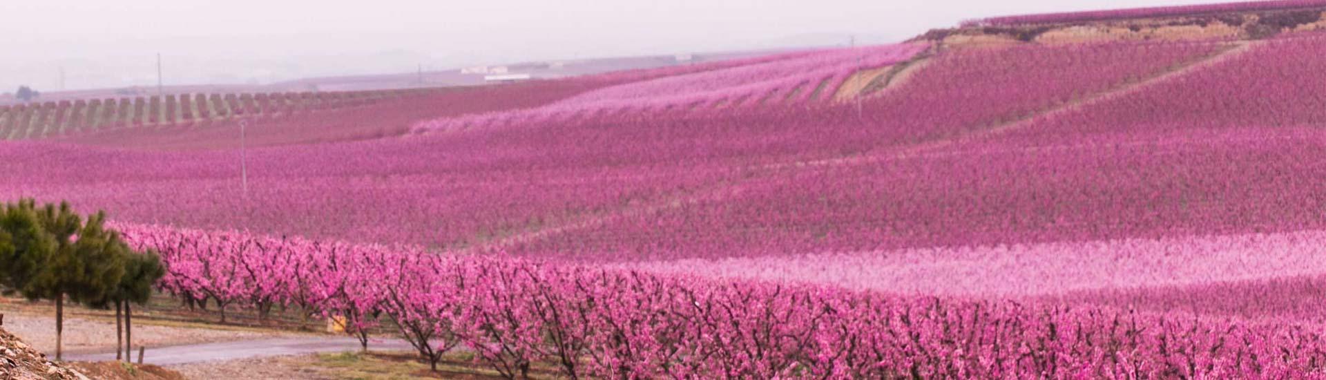 Floración Aitona